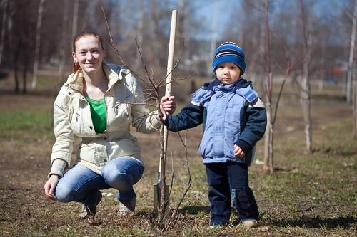 Plant some trees